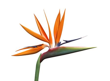3D-afbeelding van een paradijsvogel bloem Stockfoto