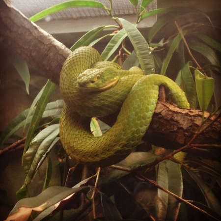 Reptielenhuis Stockfoto - 21697413