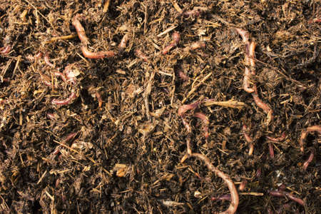 weerzinwekkend: Close-up gedetailleerd beeld van de Zuid-Afrikaanse aarde wormen. Stockfoto