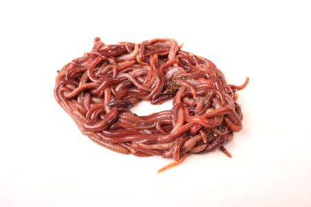 weerzinwekkend: Close-up gedetailleerde afbeelding van de Zuid-Afrikaanse aarde wormen. Stockfoto