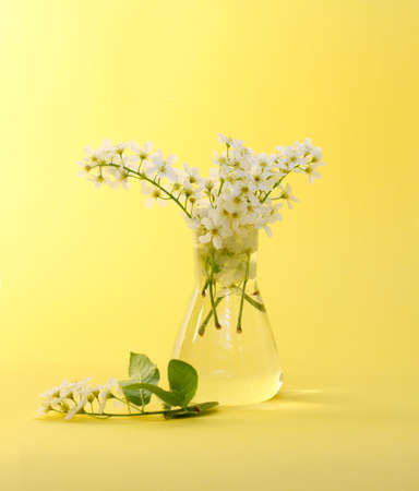 at ease: Bird cherry, white, flowers, a vase, transparent, water, round, a bouquet, tenderness, ease, spring