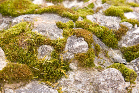 emergence: moss, anophyte, backgrounds, nature, plant, forest, close-up, pattern, green, textured, moss-grown, macro, abstract, rough, backdrop, boreal, leaf, growth, botany, vitality, bog, color, ornate, cracked, emergence, haircap, lifestyles, level, material, sur Stock Photo