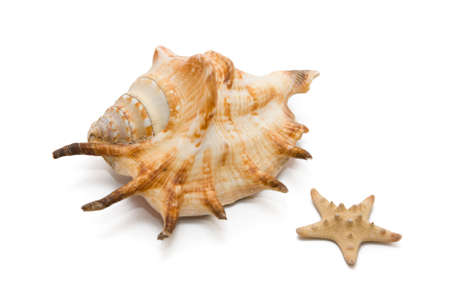 shell, white, starfish, sea, crustacean, clam, food, isolated, star, prepared, fish, shape, mussel, animal, shellfish, background, cut, conch, seafood, on, out, beach, scallop, life, eating, tropical, object, cowrie, healthy, vacations, ingredient, climat Stock Photo - 2900785