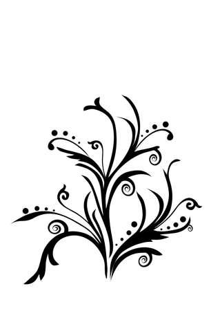 Scroll, cartouche, decor, illustration, flower Illustration