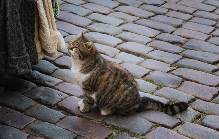 be alert: City cat is walking on the street Stock Photo
