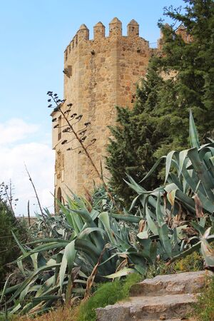 types of cactus: Exotic plants near the old city walls Stock Photo