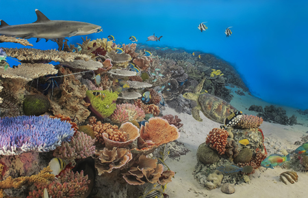 Underwater panorama of a tropical reef with a shark and a turtle. Stock Photo
