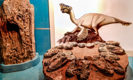 Valencia, Spain - January 2019: Image of Orviraptor and the dinosaur's nest. Editorial