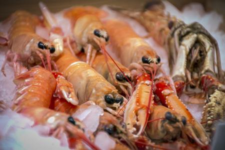 Fresh seafood, shrimp and langoustines, sea urchins Banque d'images