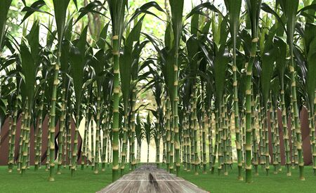 Walk in a beautiful bamboo grove. 3d animation.