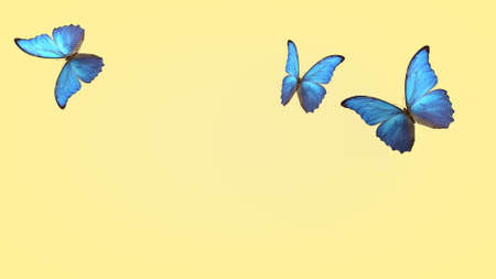 flight of summer blue butterflies. butterfly on a light background. 3d rendering. Фото со стока