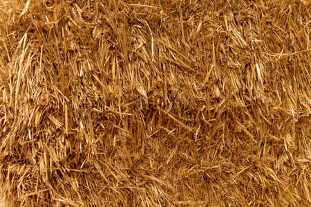 golden hay background, textured straw closeup, front view Фото со стока - 151286645