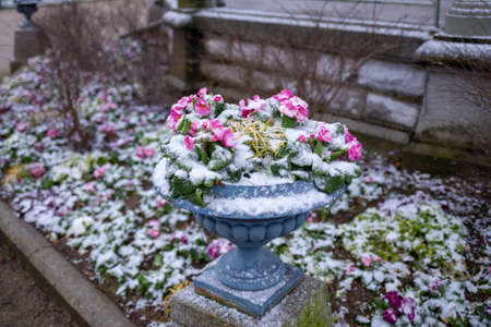 Beautiful closeup of spring snow covers flowers