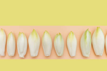 many raw endives salad roots or chicory on yellow and orange background, top view, healthy organic meal concept