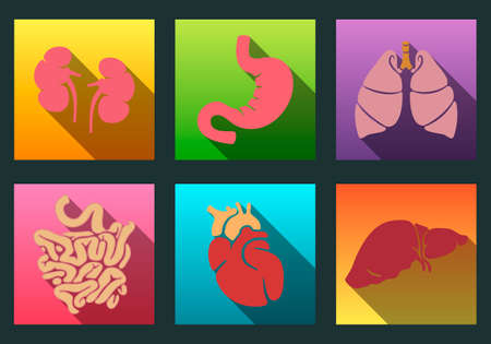 organos internos: Órganos humanos internos planas iconos larga sombra establecen con - corazón, los pulmones, el hígado, los riñones, el intestino, el estómago.
