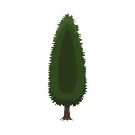 Cypress tree isolated on white Illustration