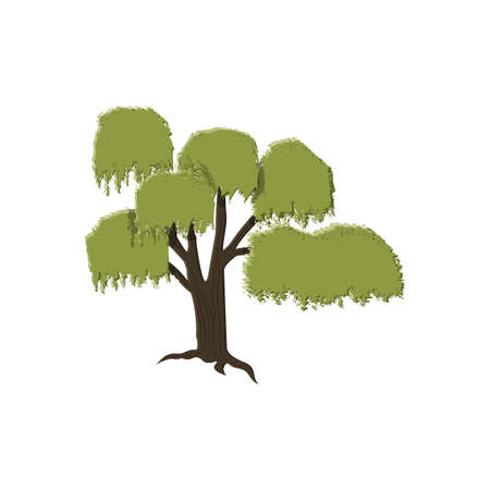 weeping willow tree: willow tree isolated on white