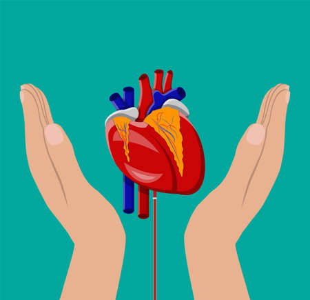 Hand of donor with heart. Blood donation day concept. Human donates blood. Vector illustration in flat style. Illustration