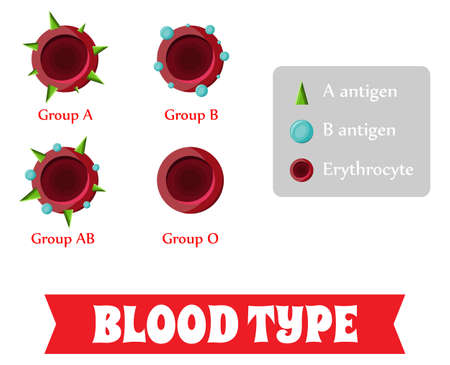 Blood group. Blood type. Фото со стока - 79386267