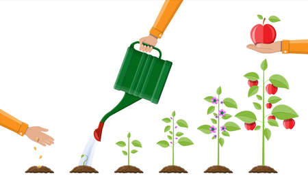 Crecimiento de la planta, desde la brotación hasta el fruto. Plantación de arboles. Planta de semillero de jardinería. Línea de tiempo Ilustración vectorial en estilo plano