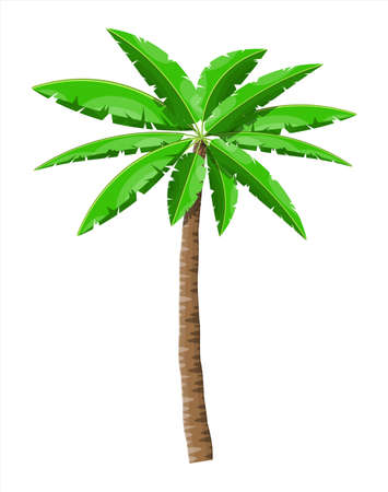 Tropical green palm. Jungle leaves Illustration
