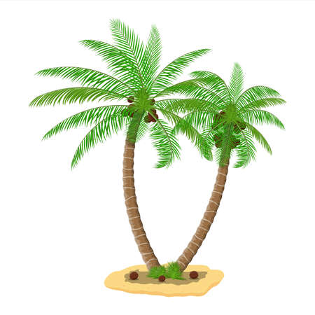 Tropical green palm. Jungle leaves. Coconut palm, monstera, fan palm, rhapis. Natural leaf, exotic branches tree. Vector illustration in flat style