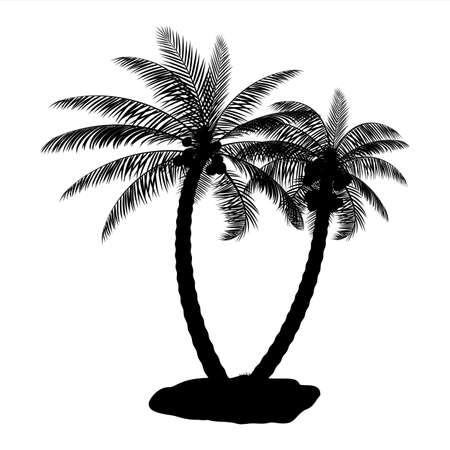 Tropical palm tree silhouette.