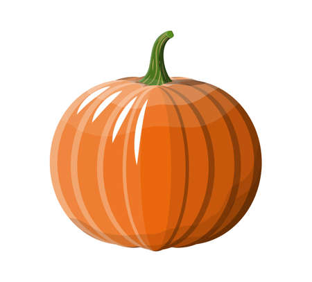 Orange pumpkin vegetable. Illustration