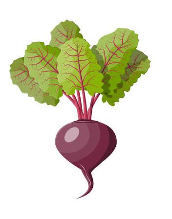 Rote Beete mit oberen Blättern. Rübengemüse. Frischer Gemüsesalat. Bio gesunde Lebensmittel. Vektorillustration im flachen Stil