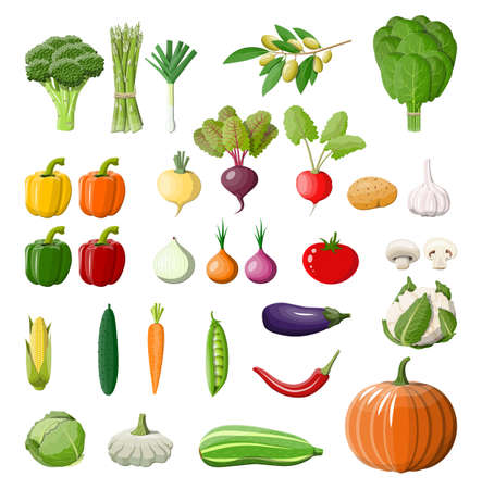 Big vegetable isolated icon set. Onion, eggplant, cabbage, pepper, pumpkin, cucumber, tomato carrot and other vegetables. Organic healthy food. Vegetarian nutrition. Vector illustration in flat style Illustration