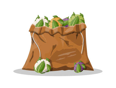 Cauliflower vegetable in canvas bag. Cauliflower isolated on white background. Organic food. Vector illustration in flat style