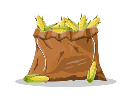 Corncobs with yellow corns and green leaves in canvas bag. Ripe corn vegetables isolated on white background. Organic healthy food. Vegetarian nutrition. Vector illustration in flat style Illustration