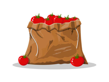 Tomato vegetable in canvas bag isolated on white. Organic healthy food. Vegetarian nutrition. Vector illustration in flat style