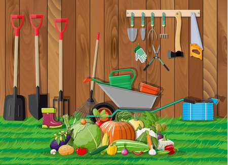 Garden harvest with vegetables and different gardening equipment, tools. Wheelbarrow hose rake can shovel secateurs gloves boots. Wooden fence, grass. Vector illustration in flat style