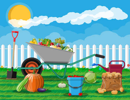 Garden harvest with vegetables and different gardening equipment, tools. Wheelbarrow shovel bucket. Wooden fence, grass. Organic healthy food. Fresh farming vegetables. Vector illustration flat style