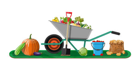 Garden harvest with vegetables and different gardening equipment, tools. Wheelbarrow shovel bucket. Organic healthy food. Fresh farming vegetables. Vector illustration flat style