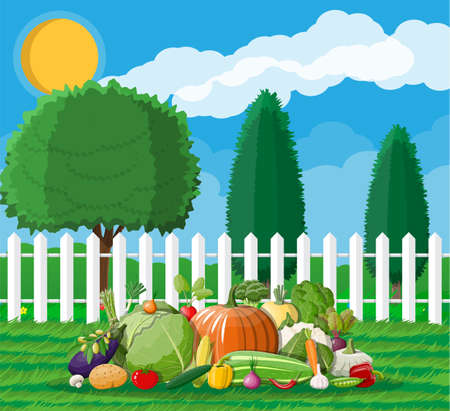 Garden harvest with vegetables. Wooden fence, trees, sun clouds, grass. Organic healthy food. Fresh farming vegetables. Vegetarian nutrition. Vector illustration in flat style Illustration