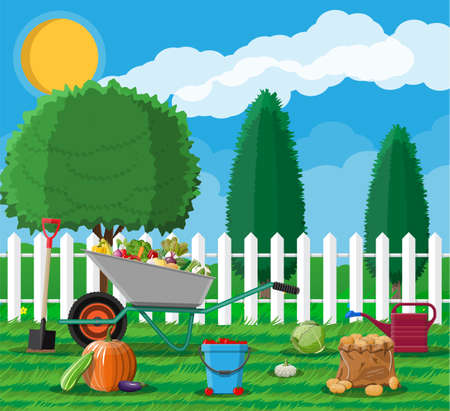 Garden harvest with vegetables and different gardening equipment, tools. Wheelbarrow shovel bucket. Wooden fence, tree. Organic healthy food. Fresh farming vegetables. Vector illustration flat style Stock Photo