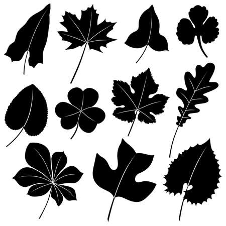 Vector image of leaves isolated on white. Vector