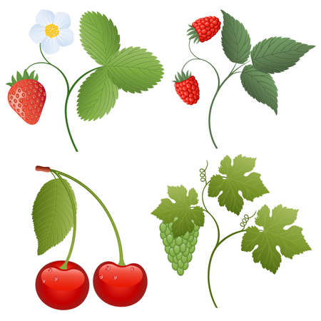Isolated image of a berries Stock Vector - 7318872