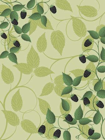 moras: Fondo floral con un blackberry
