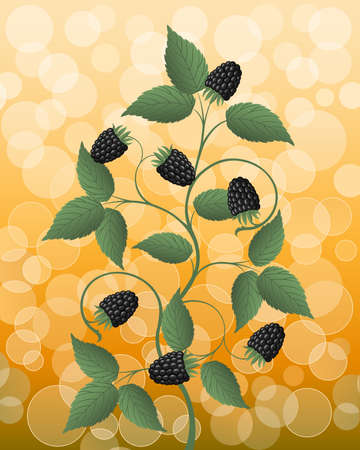 bramble: Floral background with a blackberry