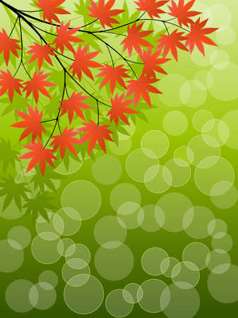 japanese maple: Japanese Maple Illustration