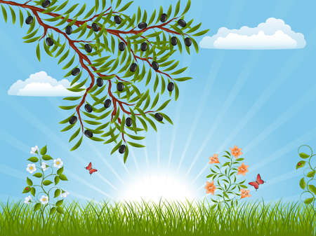 Summer landscape with an olive branch Vector