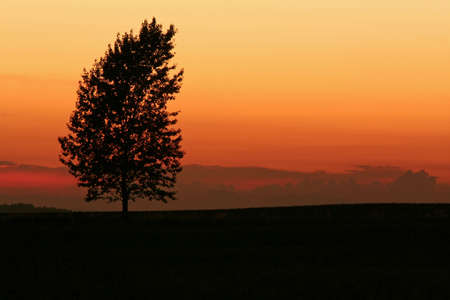 heaviness: Nightfall in the landscape with tree