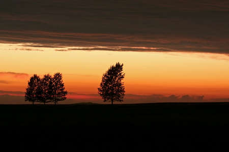 heaviness: Nightfall in the landscape with trees