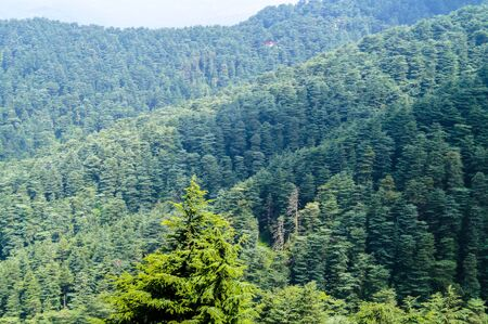 Green valley shot in Himalayan forest