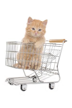 sweet little kitten in shopping basket