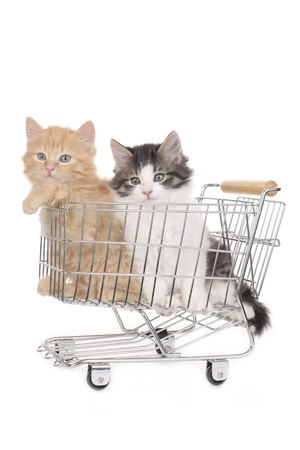 Two little kitten in a shopping basket isolated on white photo