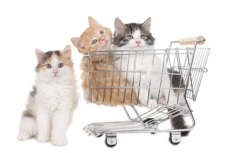 Three little kitten in a shopping baket isolated on white Imagens